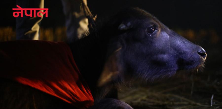 [फोटो कथा] गढीमाई मेलामा पशुबलिको विरोध हुँदै छ, दर्शनार्थी भने झन् थपिँदै छन्
