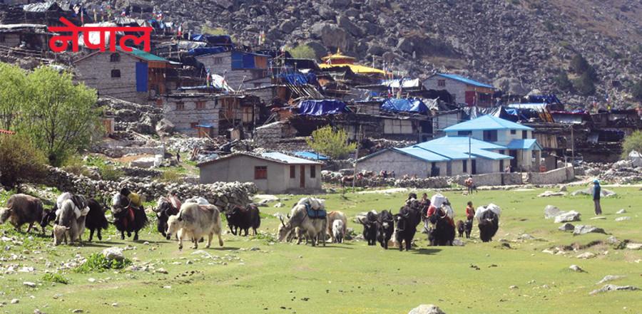 तिब्बती हाटबजारकै भर