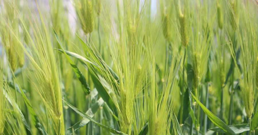 संविधानमा कृषि र खाद्य सुरक्षा