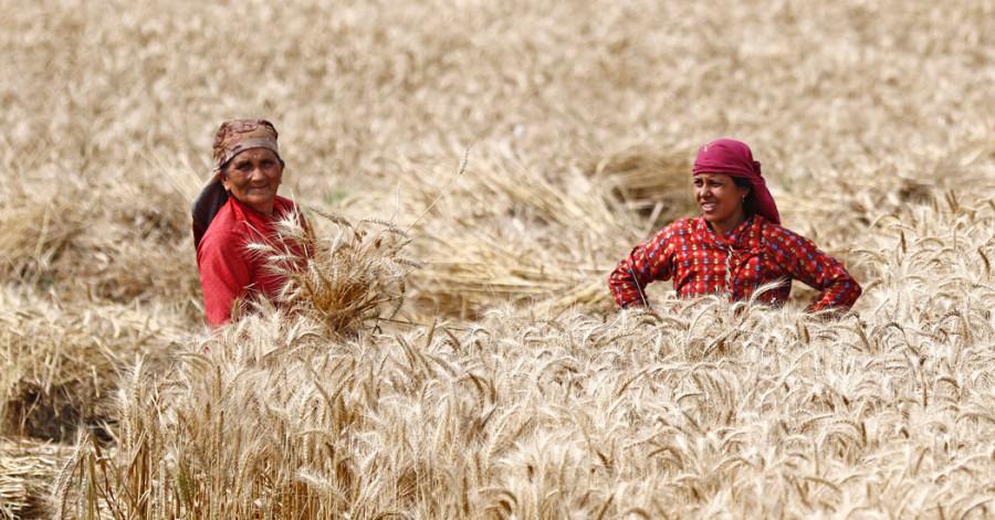 हामीले कस्तो कृषि चाहेको हो ?